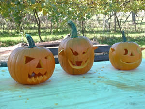 Pumpkins from the Pumpkin Workshop at Gelynis Farm