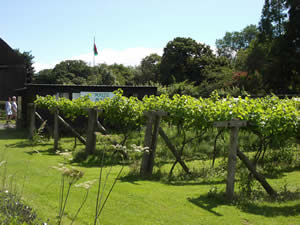 The Vines at Gelynis Farm